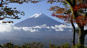 Mt. Fuji With Fall Colors In Japan