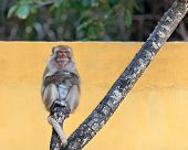 Monkey portrait on a tree
