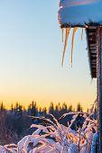 Orange icicles
