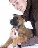 Puppy Malinois And Woman