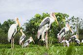 Stork On The Garden