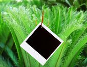Photo on fish hook on green bush background