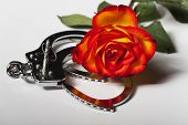 stock photo of sadism  - handcuffs with a rose on white background - JPG
