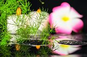 Spa Background Of Green Branch Asparagus With Drops, Plumeria Flower And Candles On Zen Stones In Re