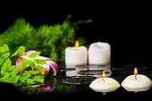 Spa Background Of Plumeria Flower, Green Branch Fern With Drops And Candles On Zen Basalt Stones In