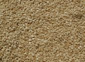Closeup of white sesame seeds