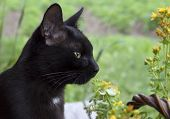 Black Cat On A Background Of Grass And Flowers Looking Away.