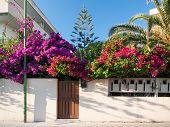 Mediterranean Flower Garden