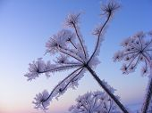 Frost covered branch