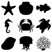 image of sea-turtles  - Set of 9 black silhouettes of sea animals - JPG