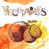vector vegetable background
