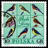 Vintage  Postage Stamp. Forest Birds.