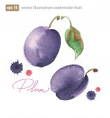 Vector Illustration Of Purple Plum With Leaf.