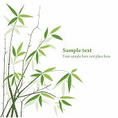 picture of bamboo leaves  - Bamboo plants background with copy space - JPG