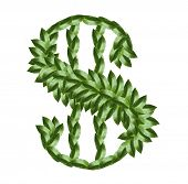 Dollar sign made of tree leaves isolated on white