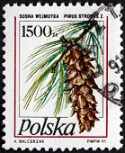 Postage Stamp Poland 1991 Eastern White Pine, Tree