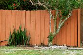 stock photo of stockade  - Backyard garden in Bonita Springs Florida showing wooden fence wall orange citrus tree and mother in law tongue plant - JPG