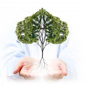 Close up of human hands holding green tree