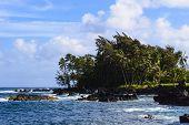 Maui East Coast