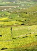 pic of plateau  - Piano Grande di Castelluccio  - JPG