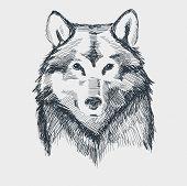 image of werewolf hunter  - Wolf head grunge hand drawn sketch vector illustration - JPG