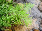 stock photo of fern  - Fresh Fern over Stream Water Natural Background - JPG
