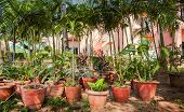 pic of house plant  - Many clay pots with tropical plants and flowers in a shady garden against palm trees and the house with pink walls - JPG