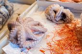 stock photo of sucker-fish  - Octopus covered with salt and put for sale in the local fish market of Catania Sicily  - JPG
