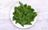 image of sorrel  - Fresh green sorrel on a white platter - JPG