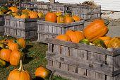 Pumpkin Bins_2221