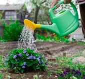 foto of pullovers  - The girl of nine years in a warm pullover and brown jeans waters color in a garden from a green watering can - JPG