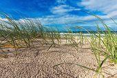 stock photo of dune grass  - Sunny beach with sand dunes - JPG