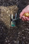 picture of weed  - hand weeding with hoe on the soil - JPG