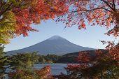 Постер, плакат: Maple Leaves Change To Autumn Color At Mt fuji Japan