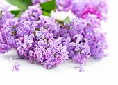 stock photo of violet flower  - Lilac flowers bunch over white wooden background - JPG