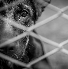 picture of heartbreaking  - A dog alone and abandoned behind a fence - JPG