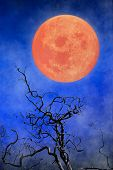 Halloween Background - Full Moon & Twisted Tree Branches