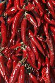 Ihungary Pepper