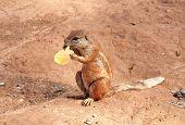 Celebración de la marmota y comer barato