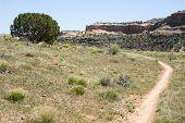 Rustler'S Loop Trail