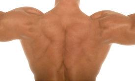 image of body builder  - Male body builder shoulders - JPG