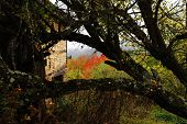 Old Ruined House Behind Autumn Tree