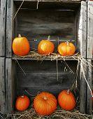 Boxed Pumpkins