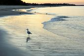 Sunset On Cranes Beach