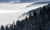 mist poster