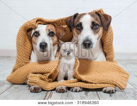 poster of Dogs and cat under the plaid. Dog and kitten at home together