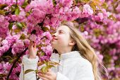 Tender Bloom. Cute Child Enjoy Warm Spring Day. Aromatic Blossom Concept. Girl Tourist Posing Near S poster