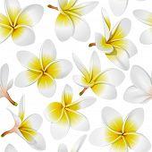 Frangipani (Plumeria) tropical flowers. Seamless pattern background. Rasterized version