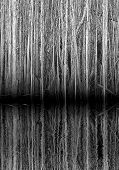 Mirrored Trees