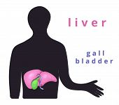 Human Internal Organ - Realistic Liver With The Name.anatomy.human Liver, Gallbladder.human Body Par poster